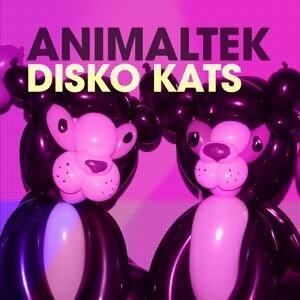 Disko Kats