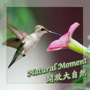 開放大自然17