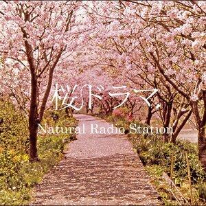 桜ドラマ (sakura drama)