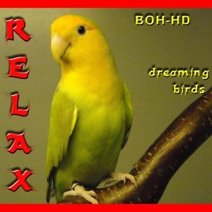Relax Dreaming Birds