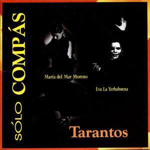Solo Compas Flamenco - Tarantos