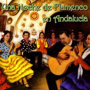 Una Noche de Flamenco en Andalucia
