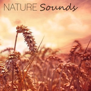 Nature Sounds – New Age Music for Sleep, Relaxation, Meditation, Spa