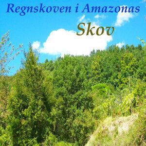 Regnskoven i Amazonas