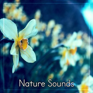 Nature Sounds – Rain and Water Sounds for Relax, Sleep, Meditation, Sounds for Spa