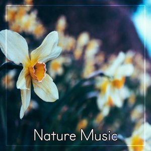 Nature Music - Ambient Sounds of Nature, Water Sounds for Relax