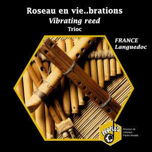 France, Languedoc: Roseau en vie... brations – France, Languedoc: Vibrating reed
