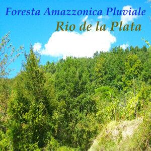 Foresta Amazzonica Pluviale