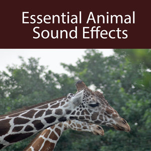 Essential Animal Sound Effects