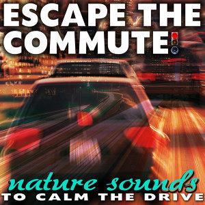 Escape the Commute! Nature Sounds to Calm the Drive