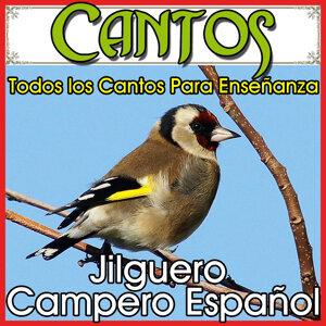 Jilguero Entrenamiento para Silvestrismo CANTADAS MAGISTRALES: onomatopeyas, Cascabeles, remates