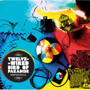 Twelve-Wired Bird of Paradise