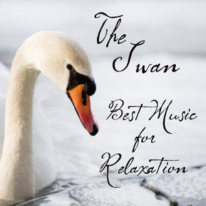Best Music for Relaxation: The Swan