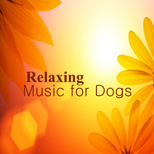Relaxing Piano Music for Dogs: Smile