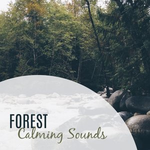 Forest Calming Sounds – Nature Sounds, Music to Rest, Music for a Walk, Chill Yourself