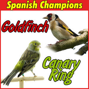 Timbrado Canary and Goldfinch, Spanish Champions
