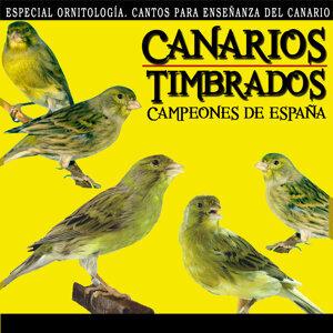 Canarios Timbrados Campeones de España. Especial Ornitología, Cantos Para Enseñanza del Canario Timbrado