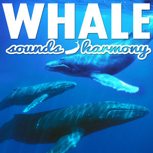 Whale Sounds & Harmony