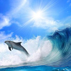 Beluga Peace