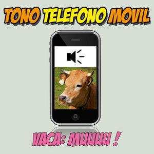Vacas Mugiendo Tono Teléfono Móvil Efecto De Sonido