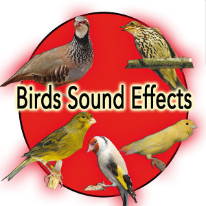 Birds and Nature Sound Effects:  Partridge, Spanish Timbrado Canary, Goldfish, thrush, Roller