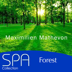 Collection Spa: Forest