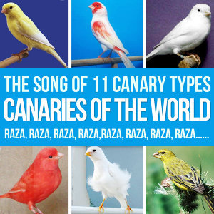 Canaries of the World. The Song of 11 Canary Types Russian, Ringing, Roller, Silvestre, Flute, Malinois and More.