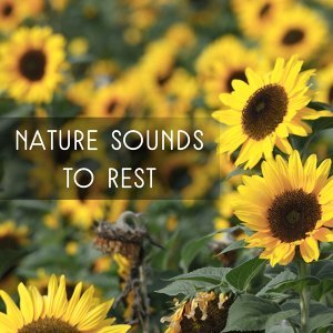Nature Sounds to Rest – Easy Listening, New Age Relaxation, Music to Calm Mind, Peaceful Waves, Harmony Spirit
