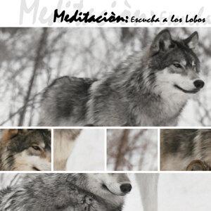 Meditación, Escucha  A Los Lobos