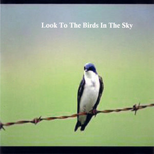 Look To The Birds In The Sky