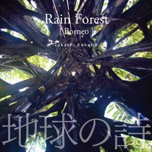 Rain Forest [Borneo]