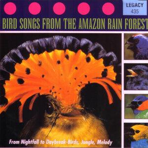 From Nightfall To Daybreak - Birds, Jungle, Melody