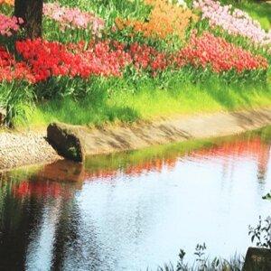 Spring泉 (S)