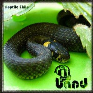 Reptile Chile