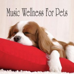 Music Wellness for Pets