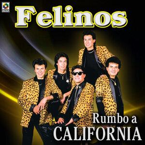 Rumbo A California - Felinos