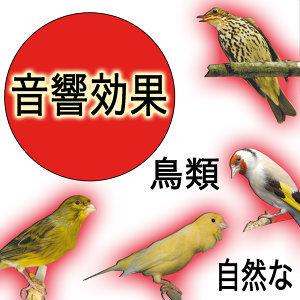 音響効果  鳥類  自然な