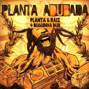 Planta Adubada