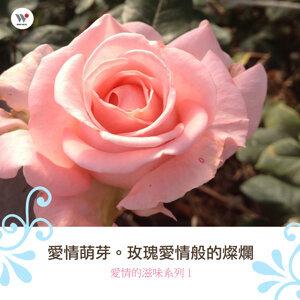 愛情萌芽-玫瑰愛情般的燦爛