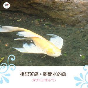 相思苦痛-離開水的魚