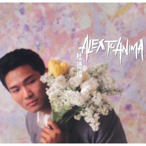 華星40 -Anima