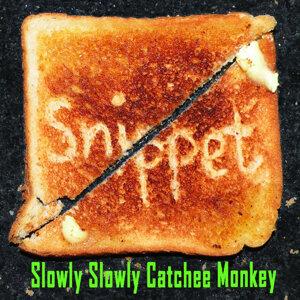 Slowly Slowly Catchee Monkey