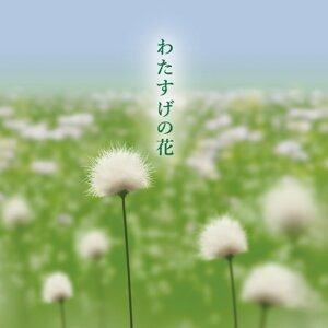 わたすげの花