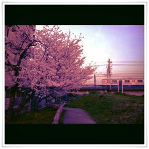 under lover ~黙祷の花~