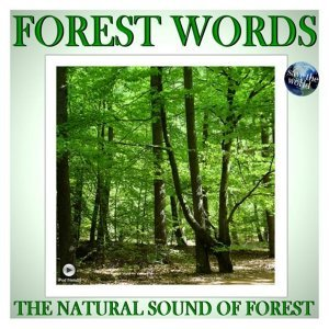 The Natural Sound Of Forest