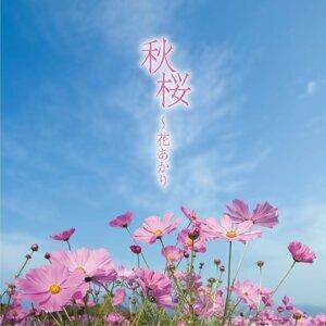 秋桜~花あかり