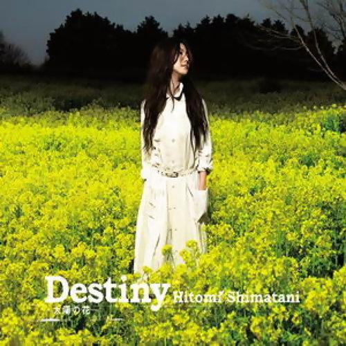 Destiny -太陽花- / 戀水-tear of love-