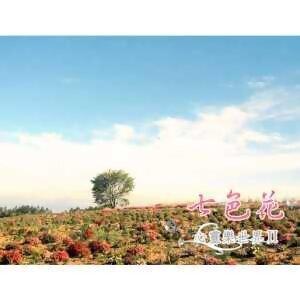 心靈樂世界2 - 七色花