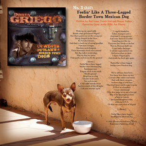 Three-Legged Border Town Dog