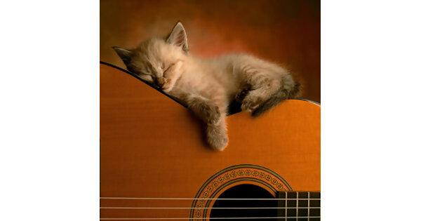 【洋・邦】No.1猫好きミュージシャンは誰だ!?